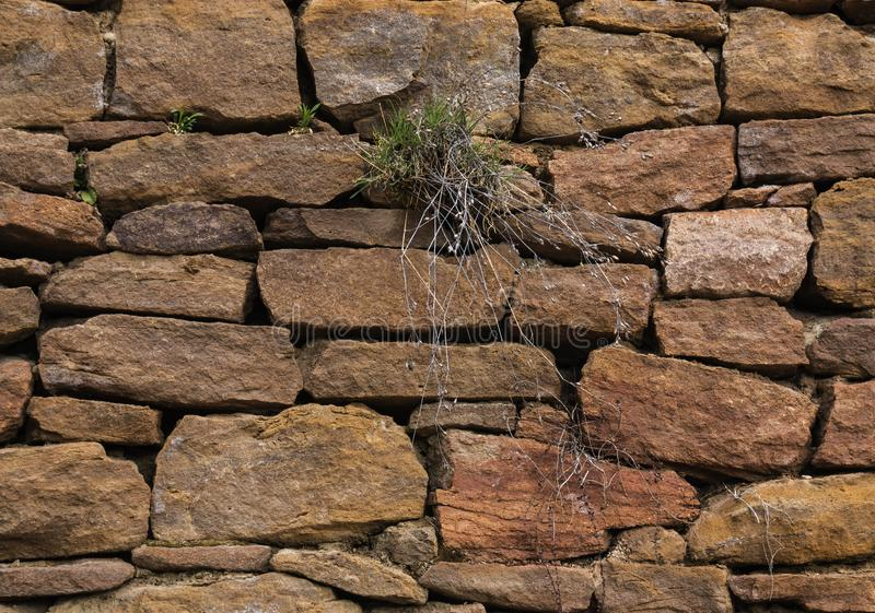 The wall is made of old, ancient stones, with plants growing from seams and cracks. close up. The wall is made of old, ancient stones, with plants growing from royalty free stock images