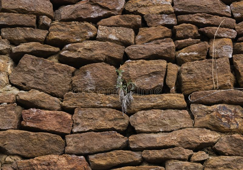 The wall is made of old, ancient stones, with plants growing from seams and cracks. close up. The wall is made of old, ancient stones, with plants growing from royalty free stock photos