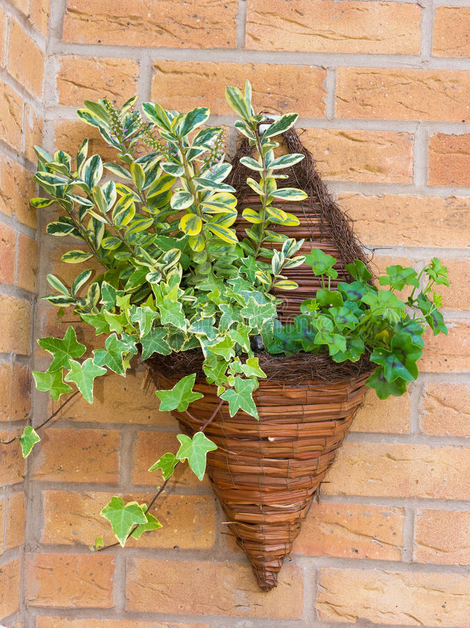 Free Wall Mounted Wicker Basket Containing Plants Stock Photos - 35590483