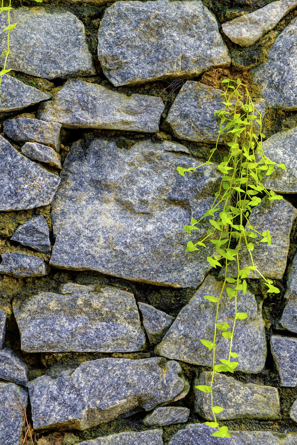 Download Wall Of Natural Stone And Sprouted Grass Stock Photo - Image: 28838706