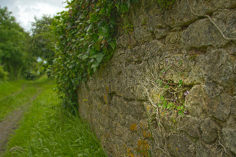 Wall in Normandy stock photography