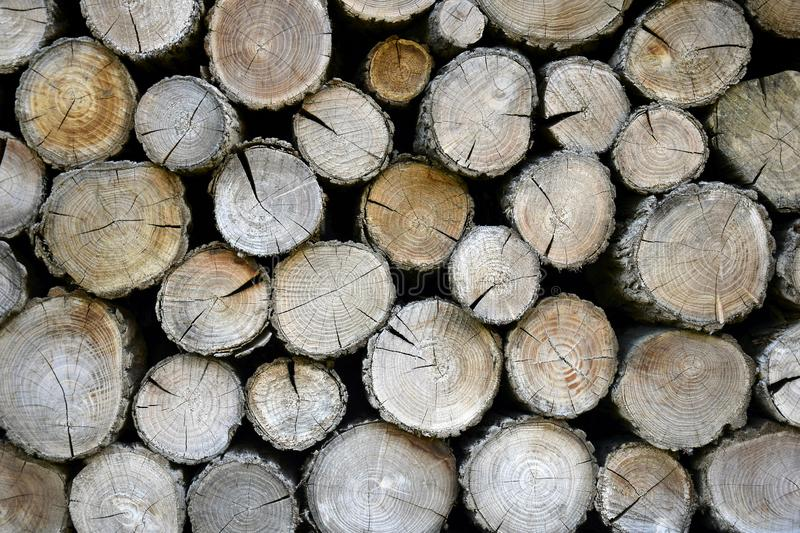 Wall of old wooden logs with cracked ends. Beautiful pattern of annual rings on the cut of the tree. Background. Close-up. Selective focus royalty free stock photos