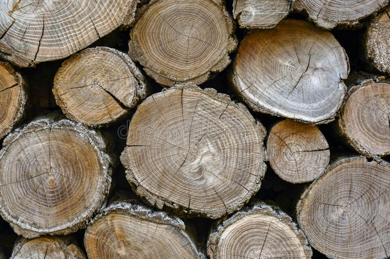 Wall of old wooden logs with cracked ends stock photography