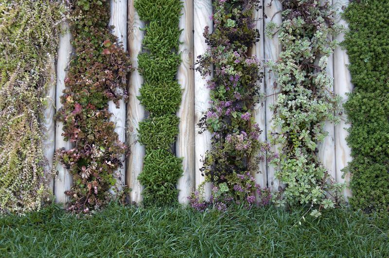 Wall of plants in the garden. Beautiful decor royalty free stock photo