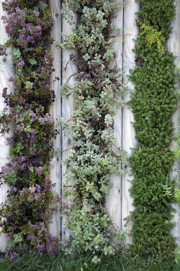 Wall of plants in the garden. Beautiful decor royalty free stock photos