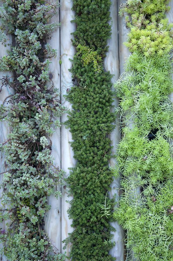 Wall of plants in the garden. Beautiful decor stock photo