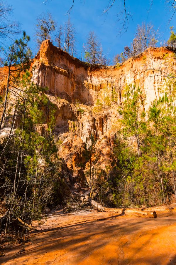 Wall of Providence Canyon with trees, USA royalty free stock photo