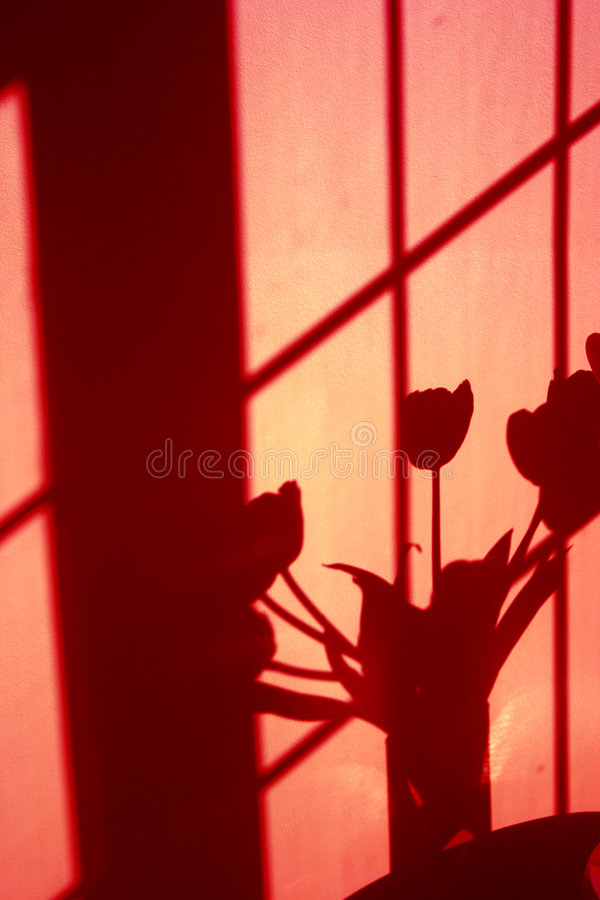 Download Wall shadow of tulips stock photo. Image of tint, flowers - 109988