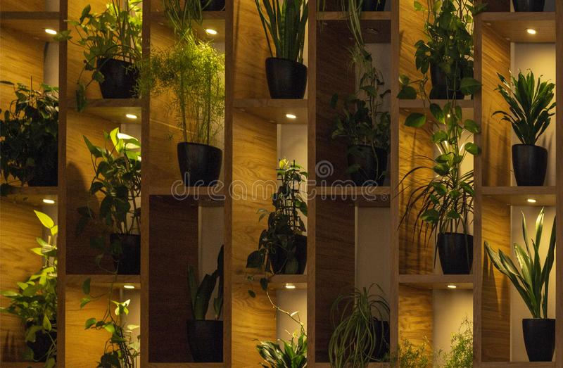 Wall of shelves with flowers in pot. backlit of lamps. interior royalty free stock images