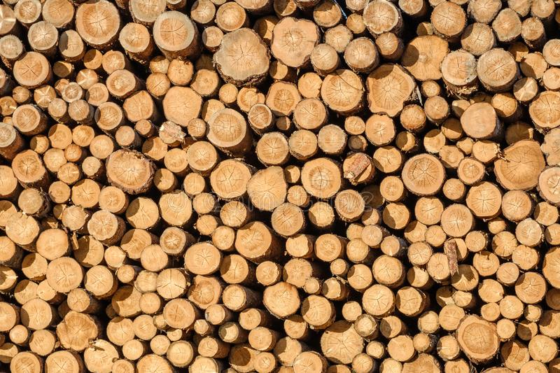 Wall of stacked wood logs stock photos