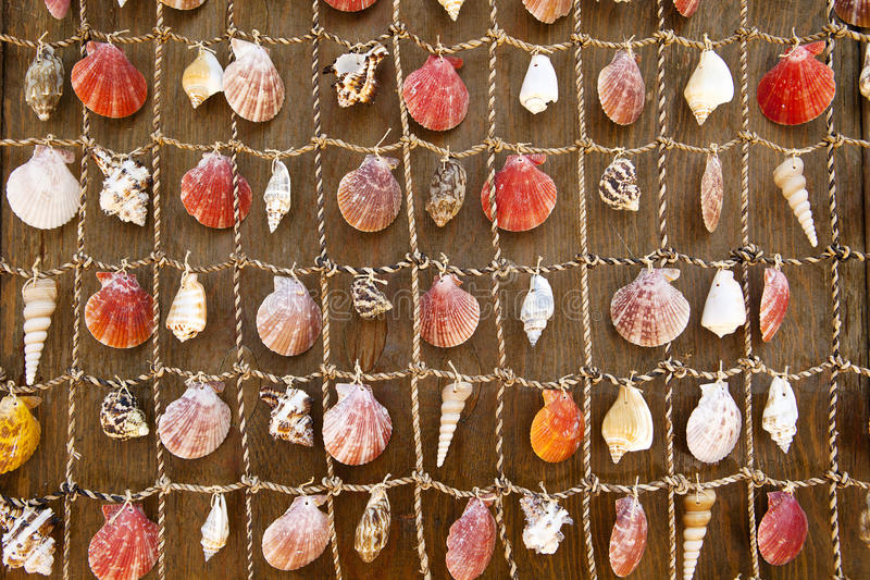 Wall Tapestry of Sea Shells royalty free stock photo