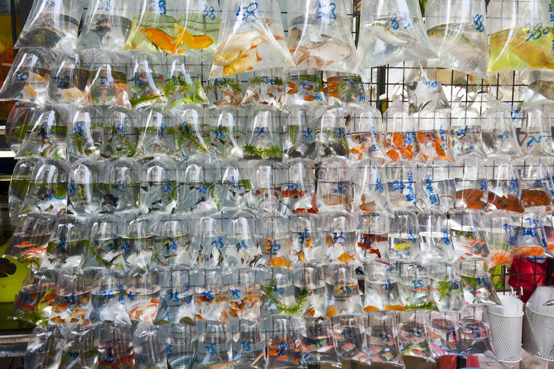 Download Wall Of Tropical Fish For Sale Stock Image - Image: 22293863