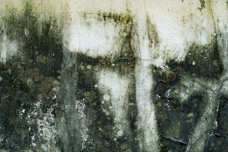 White Moldy Walls Stock Image Image Of Macro Background