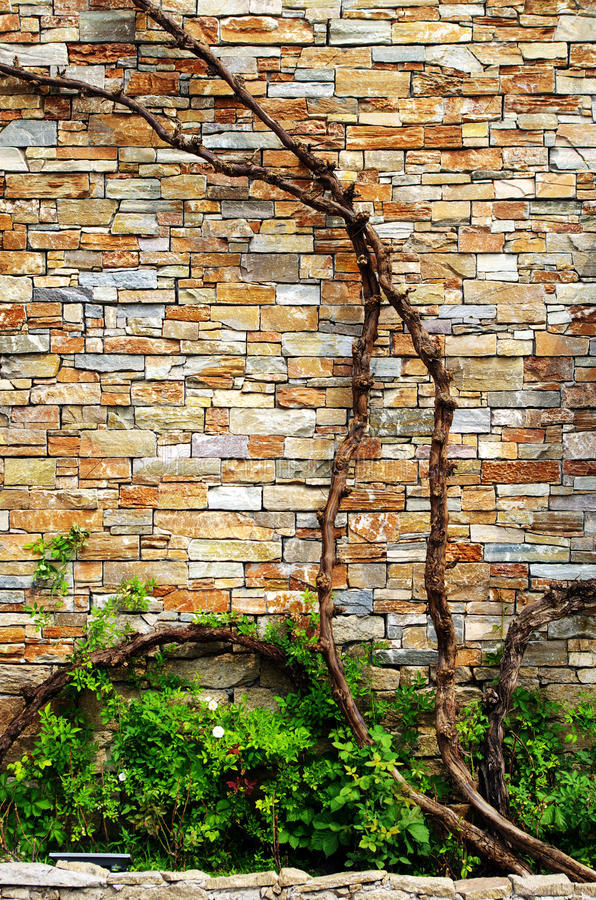 Wall with vines royalty free stock photos