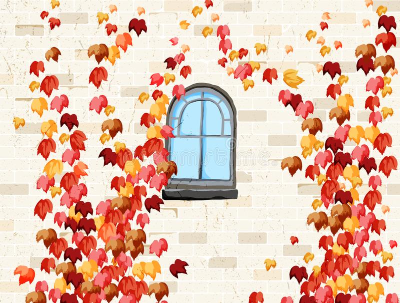 Wall and windows of house covered with red ivy in autumn stock illustration