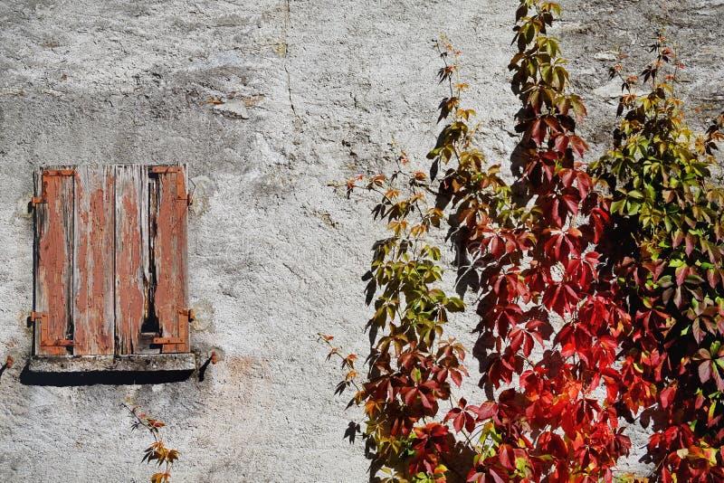 Wall, Winter, Tree, Flower stock photo
