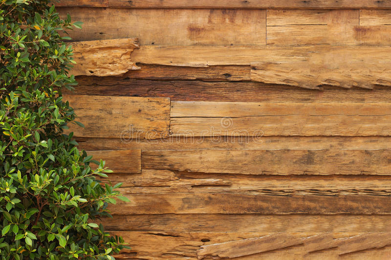 Wall wood texture and plant. S stock photo