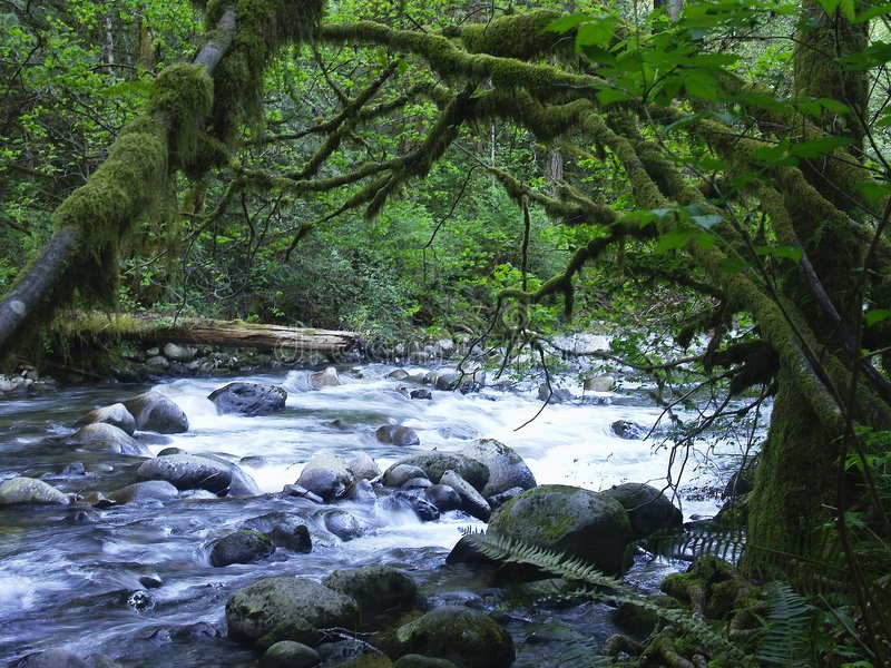 Download Wallace River stock photo. Image of peacable, river, flow - 86418