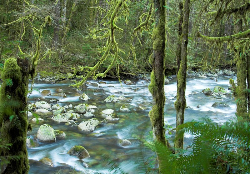 Download Wallace River in Winter stock image. Image of outdoor, moss - 519205