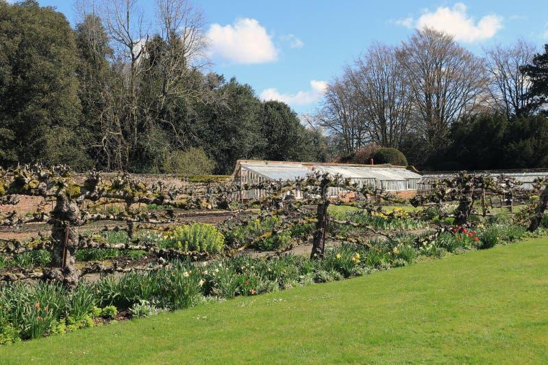 Walled trädgård på Hinton Ampner på en vårdag arkivbilder