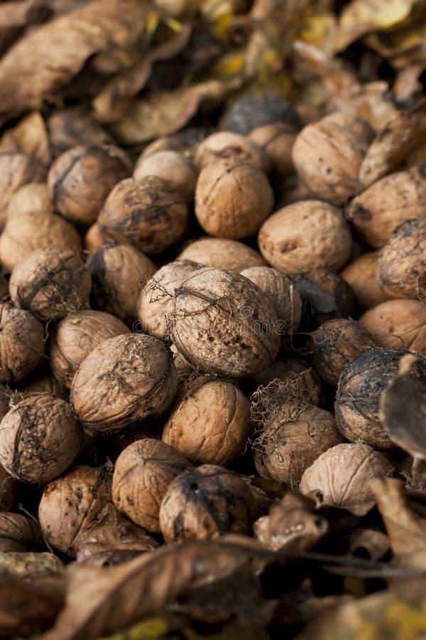 Wallnut堆 图库摄影