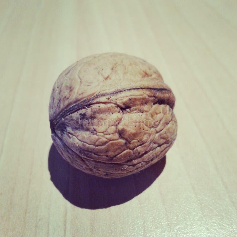 Wallnut imagens de stock royalty free