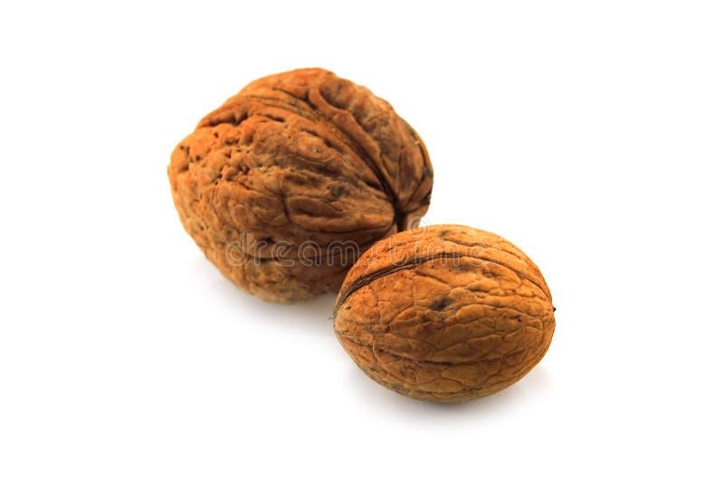Wallnut imagem de stock