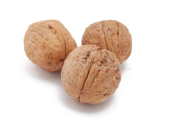 Wallnuts imagem de stock