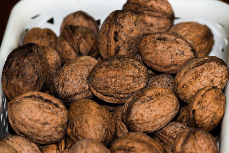 Wallnuts från min trädgård arkivbilder