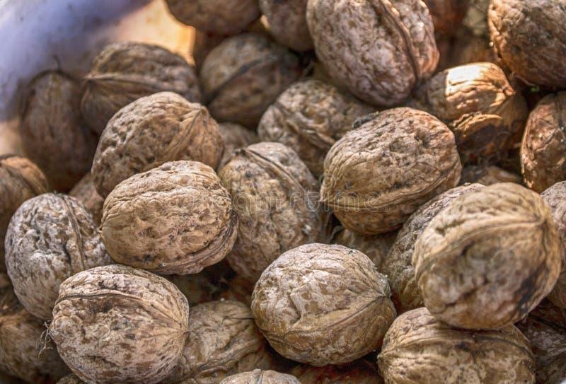 Wallnuts royalty free stock photography