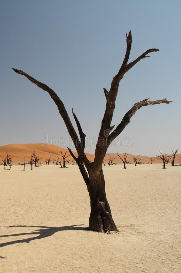 wallpaper Árvore seca no deserto imagens de stock royalty free