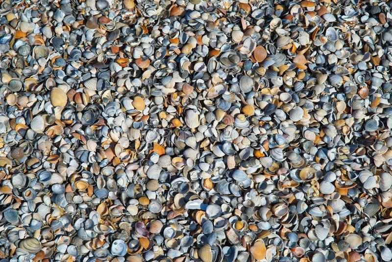 Wallpaper. Background with colored shells. Wallpaper. Detail with shells differently colored. Background royalty free stock image