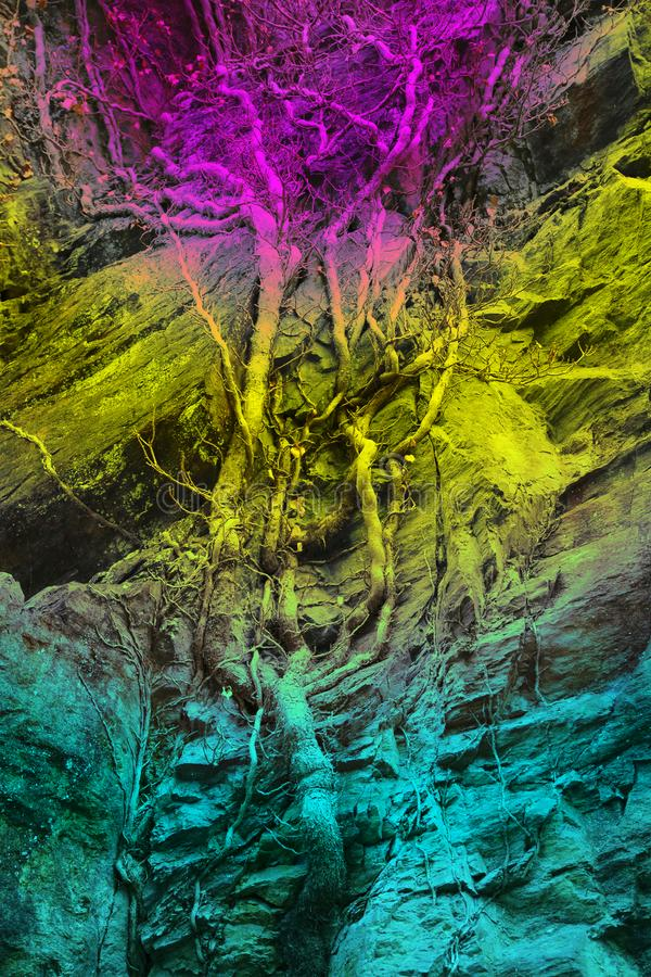 Wallpaper, background, a tree grows along a rock, rainbow-coloured, stock photo
