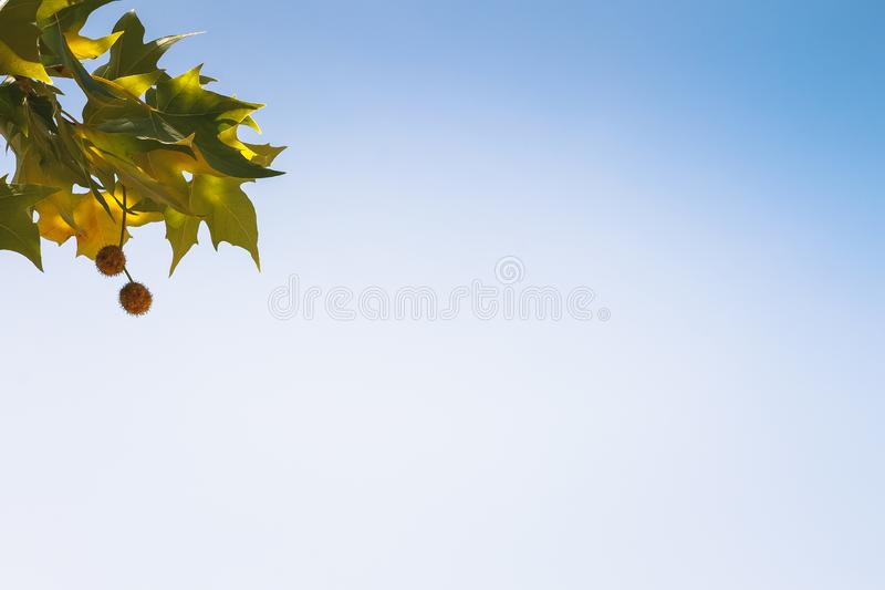 Wallpaper of a detailed leaf with sky background stock images