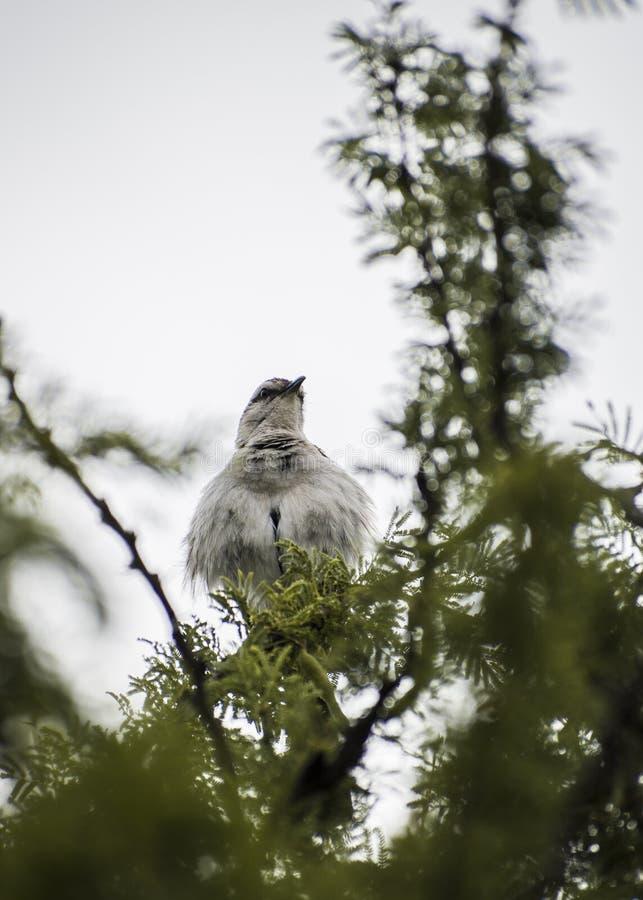 Wallpaper el pájaro en un árbol, cielo del blanco del para arriba-cierre imágenes de archivo libres de regalías