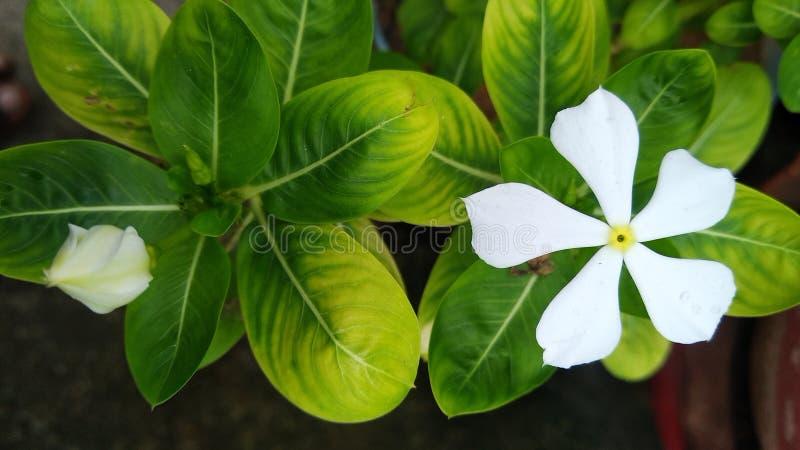 Wallpaper. Green, leaf, white, flower stock photo