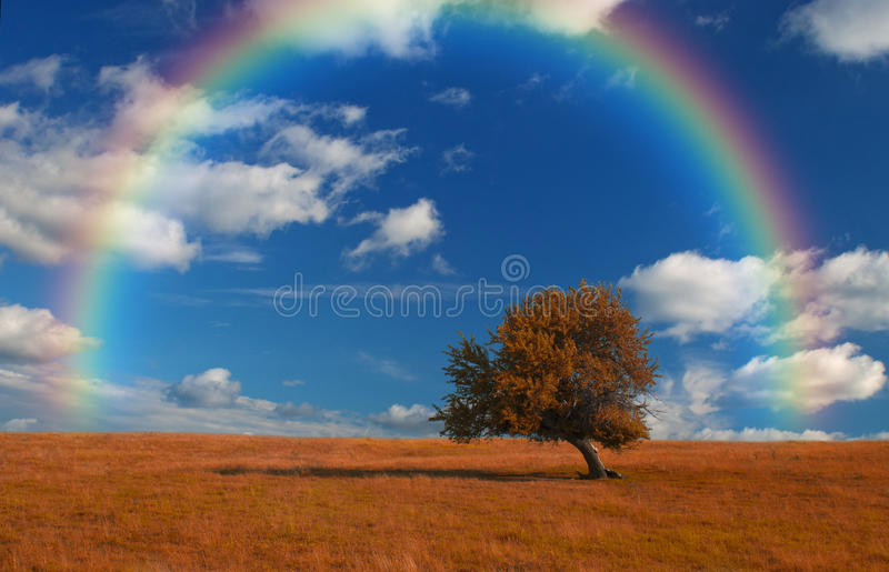Wallpaper landscape. Beautiful, unusually colored landscape with lone tree, rainbow and cloudscape, ideal for desktop wallpapers