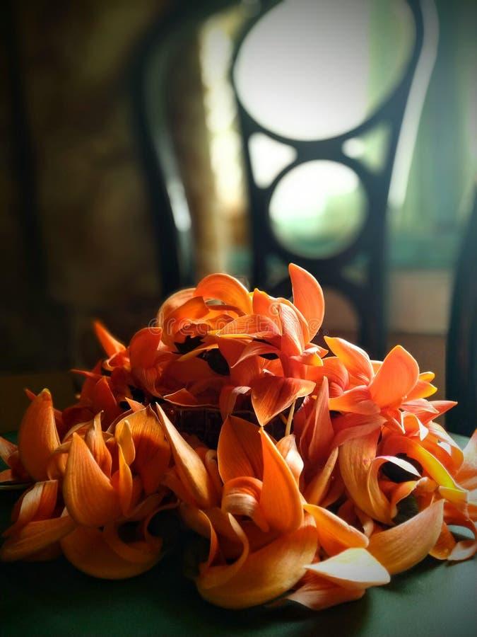 Palash Flowers Stock Photos - Download 249 Royalty Free Photos Palash Flower Wallpaper
