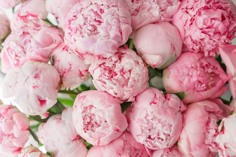wallpaper Pivoines roses de belles fleurs Compositions florales, lumière du jour images libres de droits