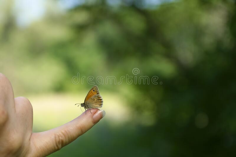 Wallpaper. Small butterfly on a finger against the background of the forest on a sunny day stock photo