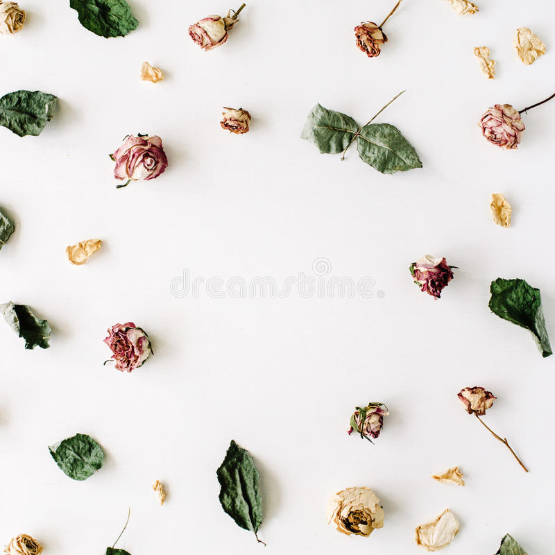Wallpaper, texture, frame. Dry pink roses and green leaves on white background. Flat lay, top view stock photo