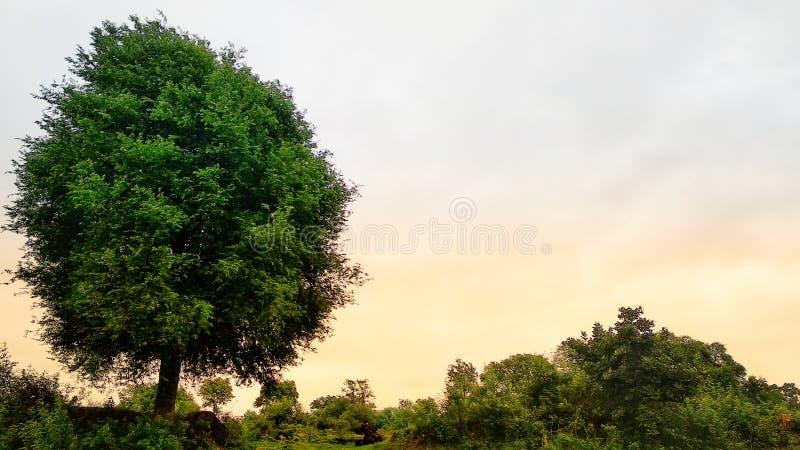 Wallpaper. Tree, sky, morning, green stock image