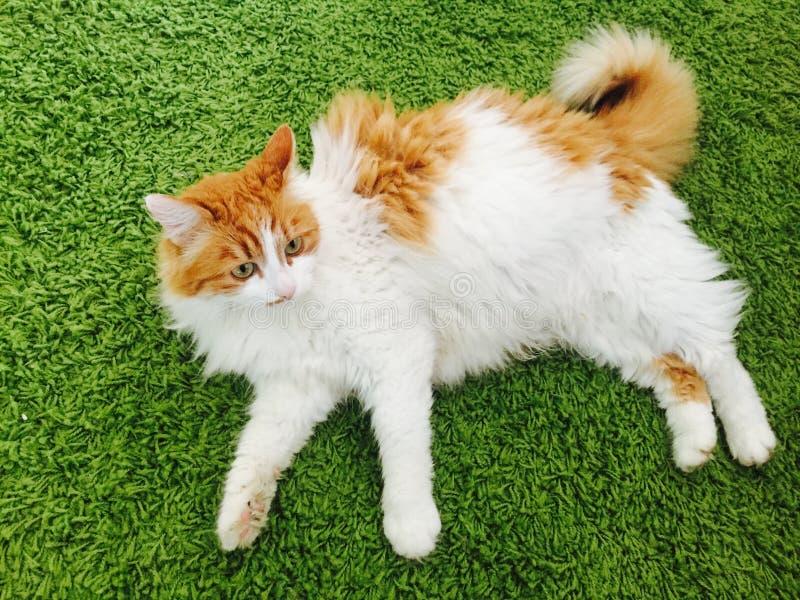Wallpeper кота стоковое фото