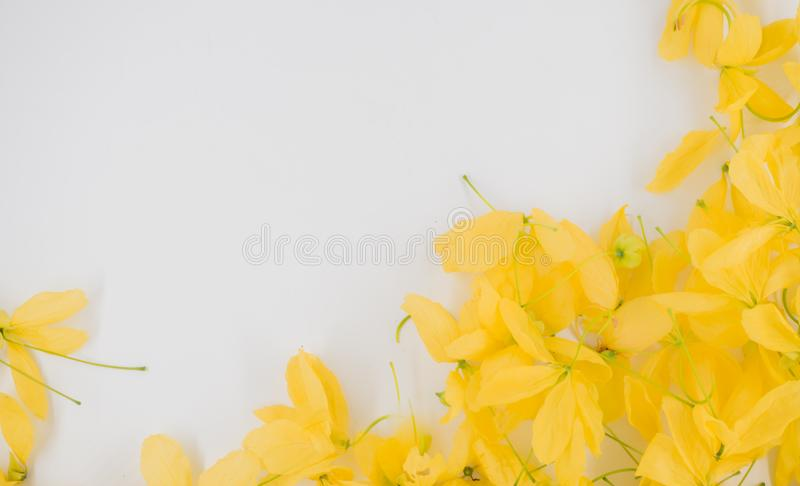 Wallpeper close up nature Yellow flower on blue background. Feeling relax natural plant using as a background royalty free stock photography