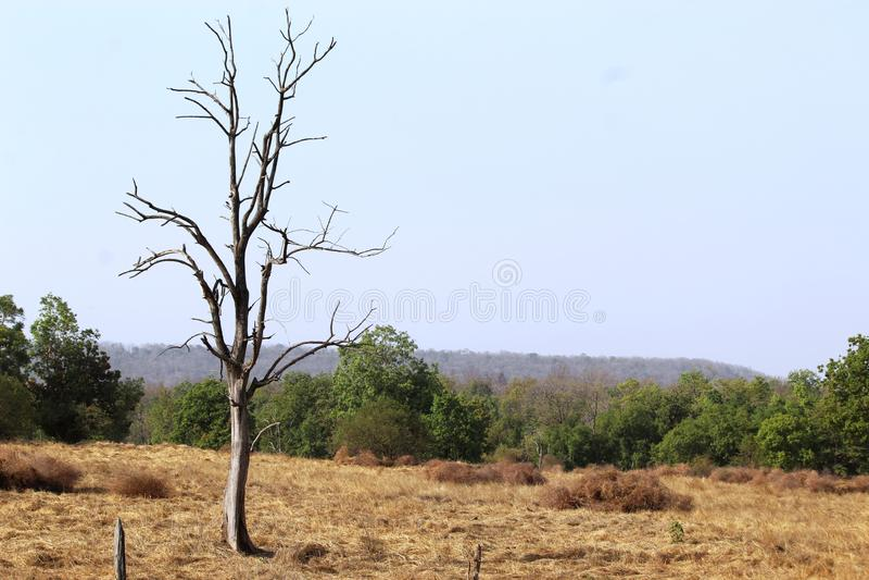 Wallpeper pench park narodowy, madhyapradesh, ind fotografia royalty free