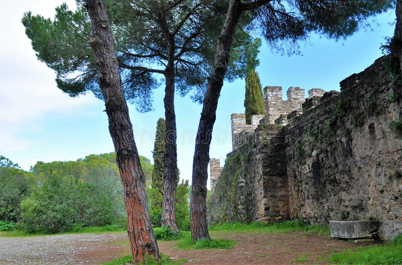 The walls of the castle and three pine trees stock photo