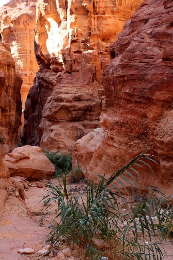 Petra in Jordan. The walls of the Siq, narrow passage that leads to Petra, Jordan stock photos