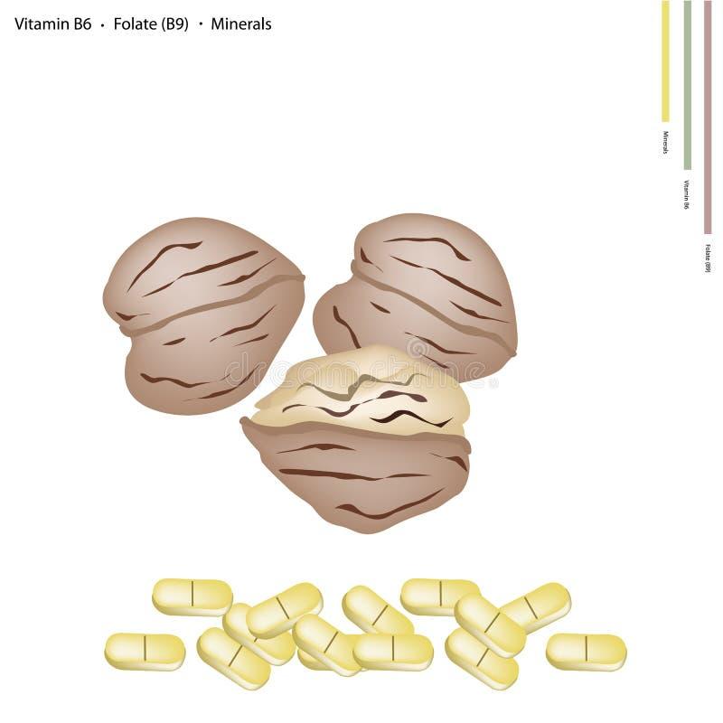 Walnüsse mit Vitamin B6, B9 und Mineralien stock abbildung
