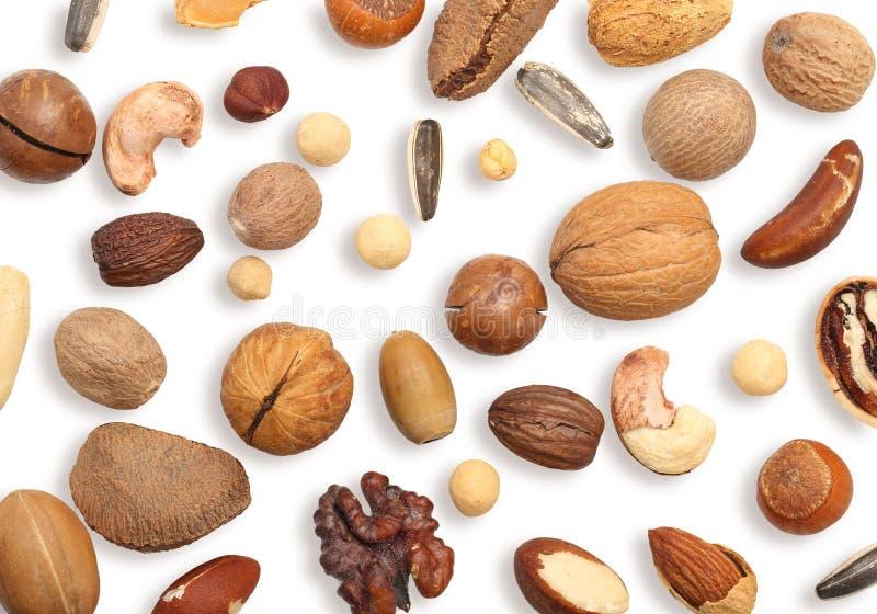 Walnuss, Acajoubaum, Mandel und Haselnuss lokalisiert auf wei?em Hintergrund stockfoto