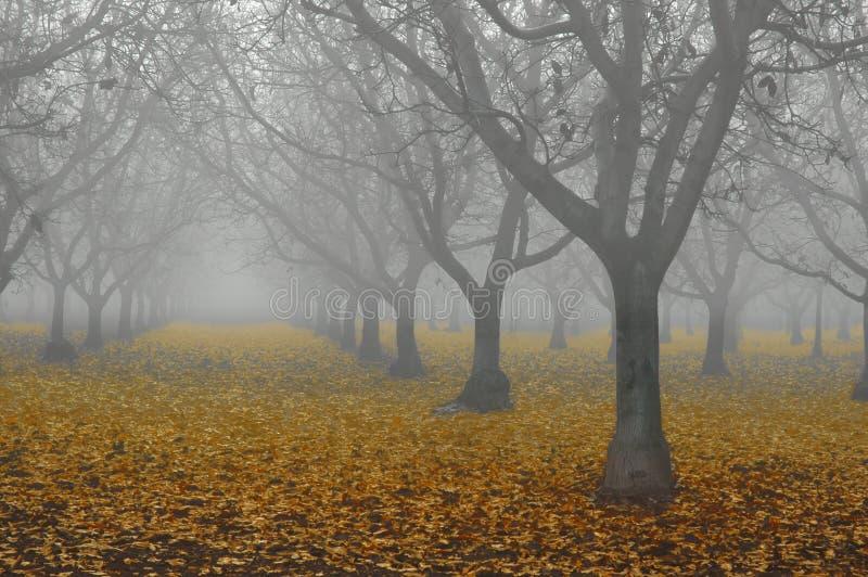 Walnuss-Waldung im Nebel lizenzfreie stockbilder